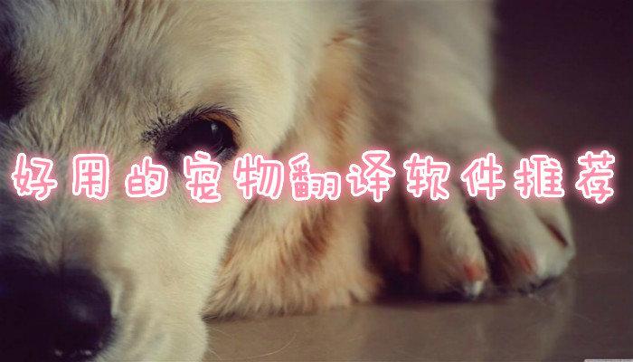 好用的宠物翻译软件推荐